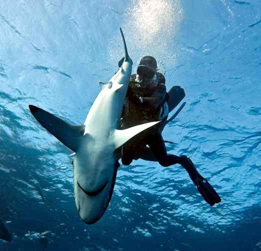 Spearfishing marlin